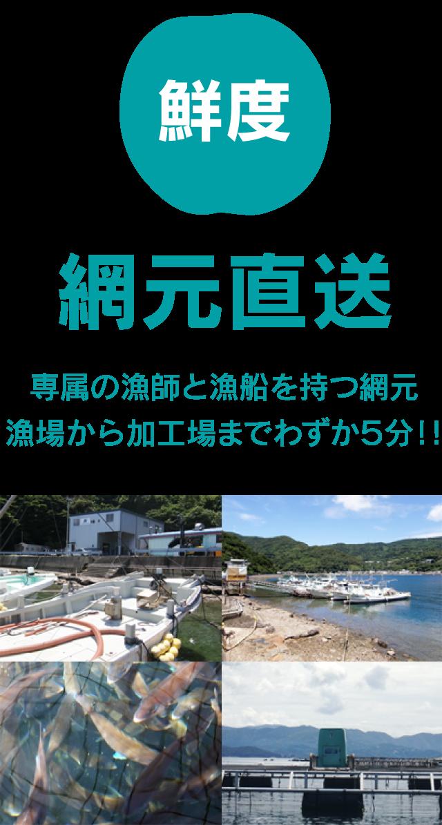 鮮度/網元直送…専属の漁師と漁船を持つ網元。漁場から加工場までわずか5分!!